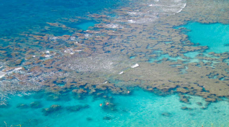 Think About Toxic Sunscreens that Killing Coral Reef Of Hawaii Island
