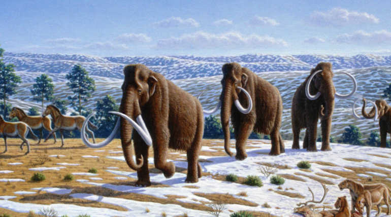 What Happens If Present Age Elephants Tucked In With Mammoth Gene