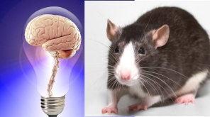 Like Humans Animals Also Can Remember From Episodic Memory Of Brain