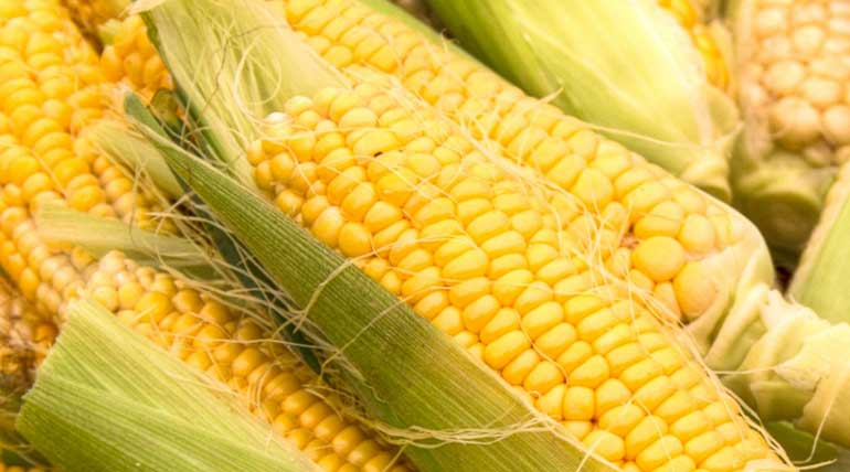 Uganda minister Matia Kasaija informed to buy off excess maize stock