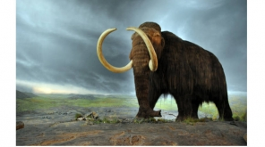 Fossils of Golden Woolly Mammoth found in Siberia, Researchers hint presence of new species
