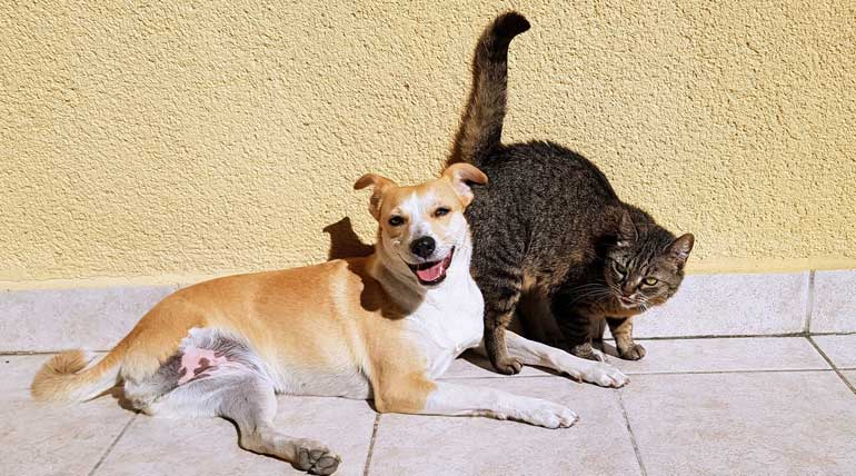 US House bans eating of dogs and cats. Image Source: pixabay.com