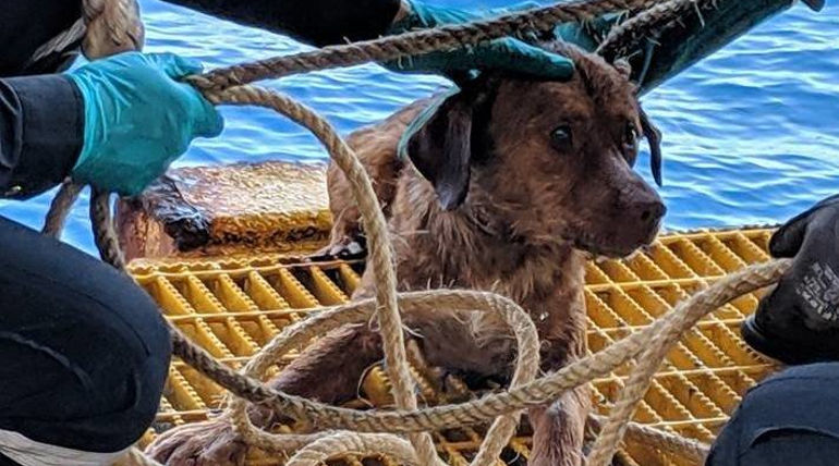 Dog Rescued at Thailand Coast , Courtesy - Vitisak Payalaw