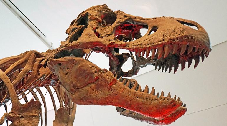 Tyrannosaurus Rex Skeleton Image