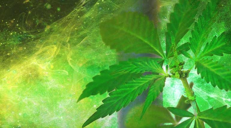 Smoking Marijuana Do No Good To Your Brain