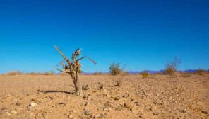 Climate Crisis Representation