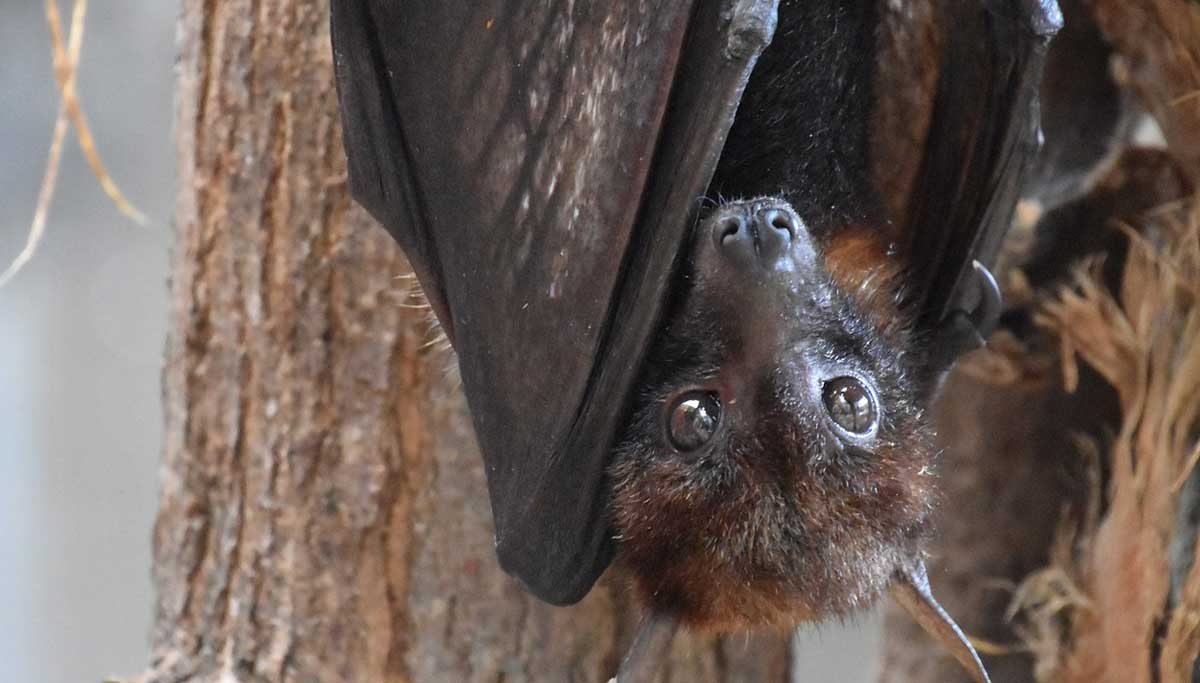 Six New Coronaviruses that were detected from bats in Myanmar
