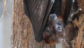 Six New Coronaviruses that were detected from bats in Myanmar