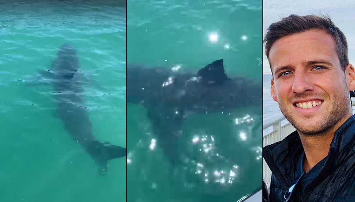 Shark Kills Passionate Surfer South of Santa Cruz