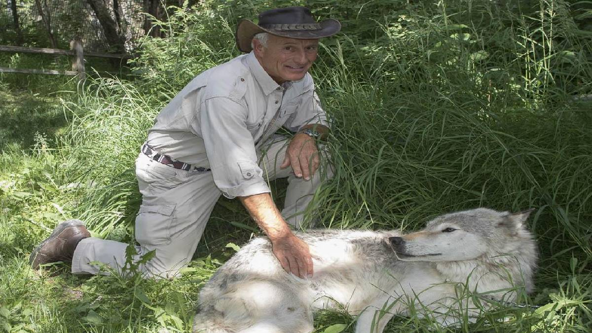 Jack Hanna at Alaska Zoo snapped with male gray wolf
